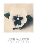 Pansy Prints by John Faulkner