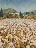 Farm Near Guillaumes Prints by Hazel Barker