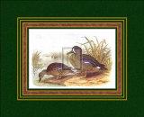 Patos III Póster por H. Jones