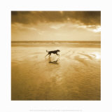 Chien courant sur la plage, West Wittering Affiches par Jo Crowther