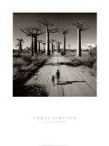 Chris Simpson - Allee des Baobabs Umělecké plakáty