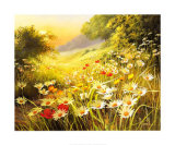 Evening Sun Prints by Mary Dipnall