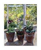 Four Pots of Auriculas Posters by J. Morley