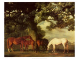 Green Pastures Poster by George Stubbs