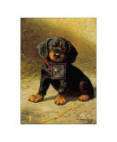 Puppy Print by H. Sperling