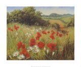 Sunlit Meadow Poster by Mary Dipnall
