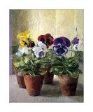 Pensées dans des pots de fleurs Affiches par J. Morley