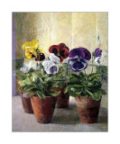 Pansies in Flower Pots Prints by J. Morley