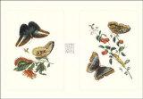 Entomology I Print