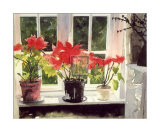 Poinsettias Prints by Richard Akerman