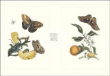 Entomology II Prints