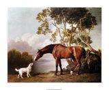 Fuchsfarbenes Pferd und weißer Hund Kunstdrucke von George Stubbs