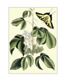 Papilio Antilochus Poster by Mark Catesby