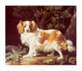 King Charles Spaniel Art by George Stubbs