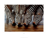 Stripes Prints by H. Van Zanten
