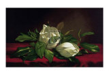 Magnolia Still Life I Poster by Martin Johnson Heade