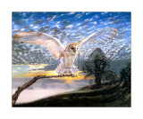 Barn Owl Art by J Cooksley