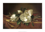 Magnolia Still Life II Prints by Martin Johnson Heade