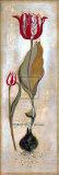 Tulipa Violoncello III Posters by  Augustine (Joseph Grassia)