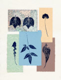 Leaf No. 101 Prints by Inka Zlin