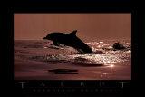 Delphinus Delphis Kunst von Bob Talbot