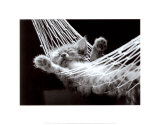 Cat Nap II Prints by David Mcenery