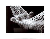 Siesta del gato II Arte por David Mcenery