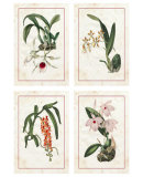Orchids Prints