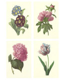 Boudoin Florals Póster