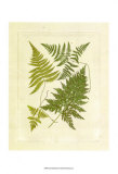 Ferns with Platemark VI Prints