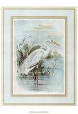 Héron blanc Affiches