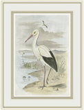 White Stork Posters