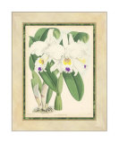 Fitch Orchid III Giclee Print by J. Nugent Fitch