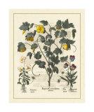 Besler Floral VI Giclee Print by Besler Basilius
