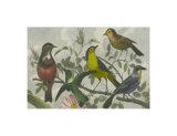 Exotic Bird VI Posters