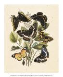 Nature's Delicate Gathering III Kunstdrucke