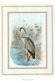 Common Heron Posters