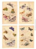 Jardini Butterflies Prints