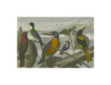 Exotic Bird I Prints