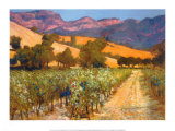 Wine Country Posters by Philip Craig