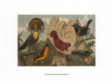 Exotic Bird IV Posters