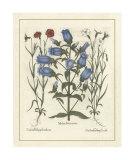 Besler Floral IV Giclee Print by Besler Basilius