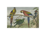 Exotic Bird II Print