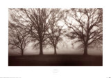 Fog Tree Study IV Print by Jamie Cook