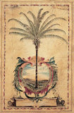 Sunset Palm Poster by Elizabeth Jardine
