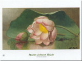 Lotus Blossom Print by Martin Johnson Heade