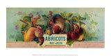 Abricots Au Jus Prints