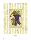 Napa Varietal I Prints by Susan Davies