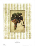 Napa Varietal II Posters by Susan Davies