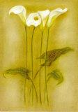 Iris Triptic II Prints by Lewman Zaid